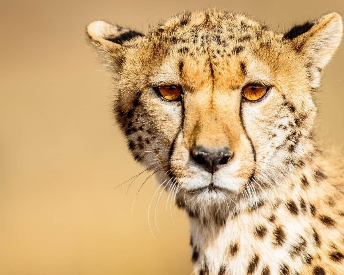 Asanja Africa Safaris