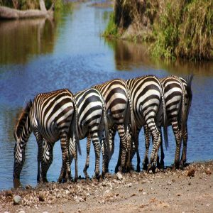 Tanzania Northern Circuit Safaris