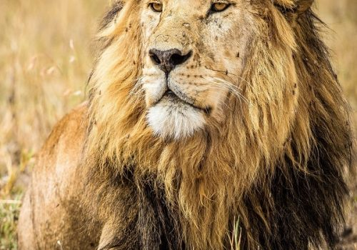 Serengeti National Park Safaris