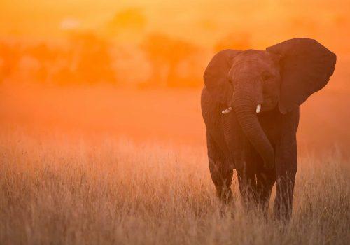 Tanzania Northern Circuit Safari