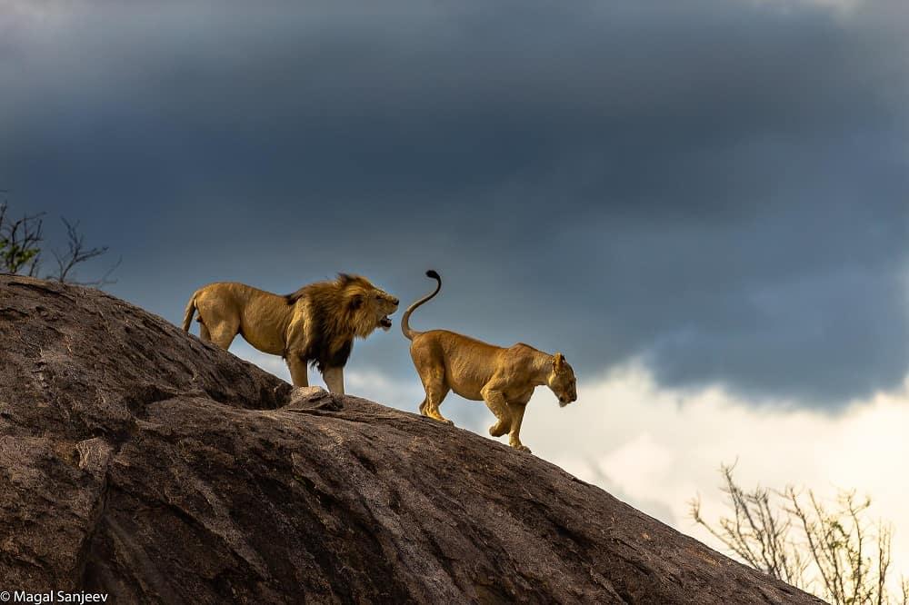 Asanja Serengeti National Park Safaris